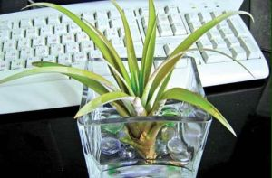 Растения против болезней